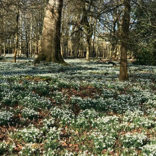 Snowdrop walk at Wexford Park